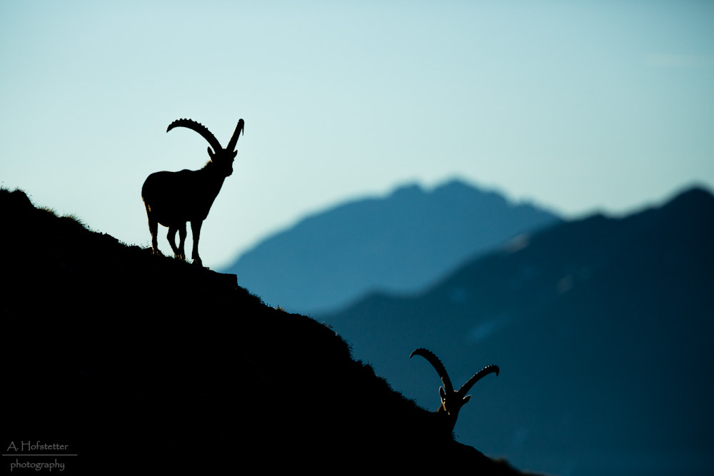 Photograph Capricorn by Andi Hofstetter on 500px