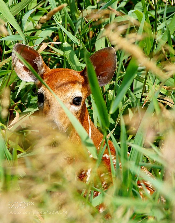Photograph Hiding by Misty Dawn Seidel on 500px