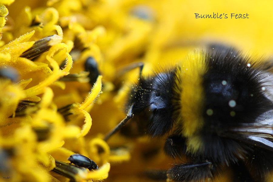 Bumble's Feast