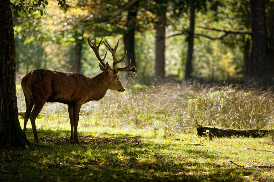 Photograph Young deer by Laurent DUFOUR on 500px