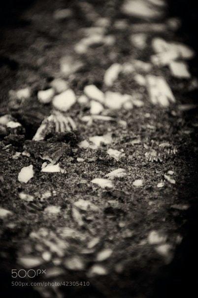 Photograph Untitled by Richard Harrington on 500px