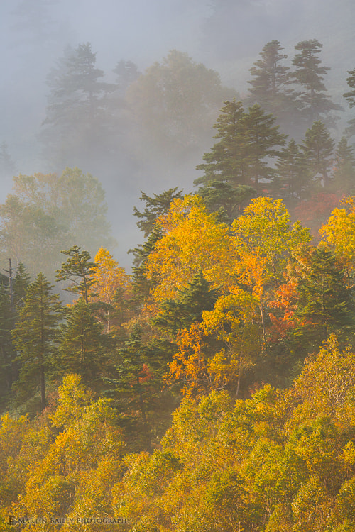 Photograph Autumn Trees in the Mist by Martin Bailey on 500px