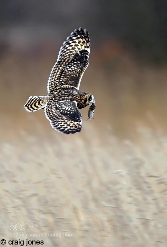 Photograph Expert Hunter by Craig Jones on 500px