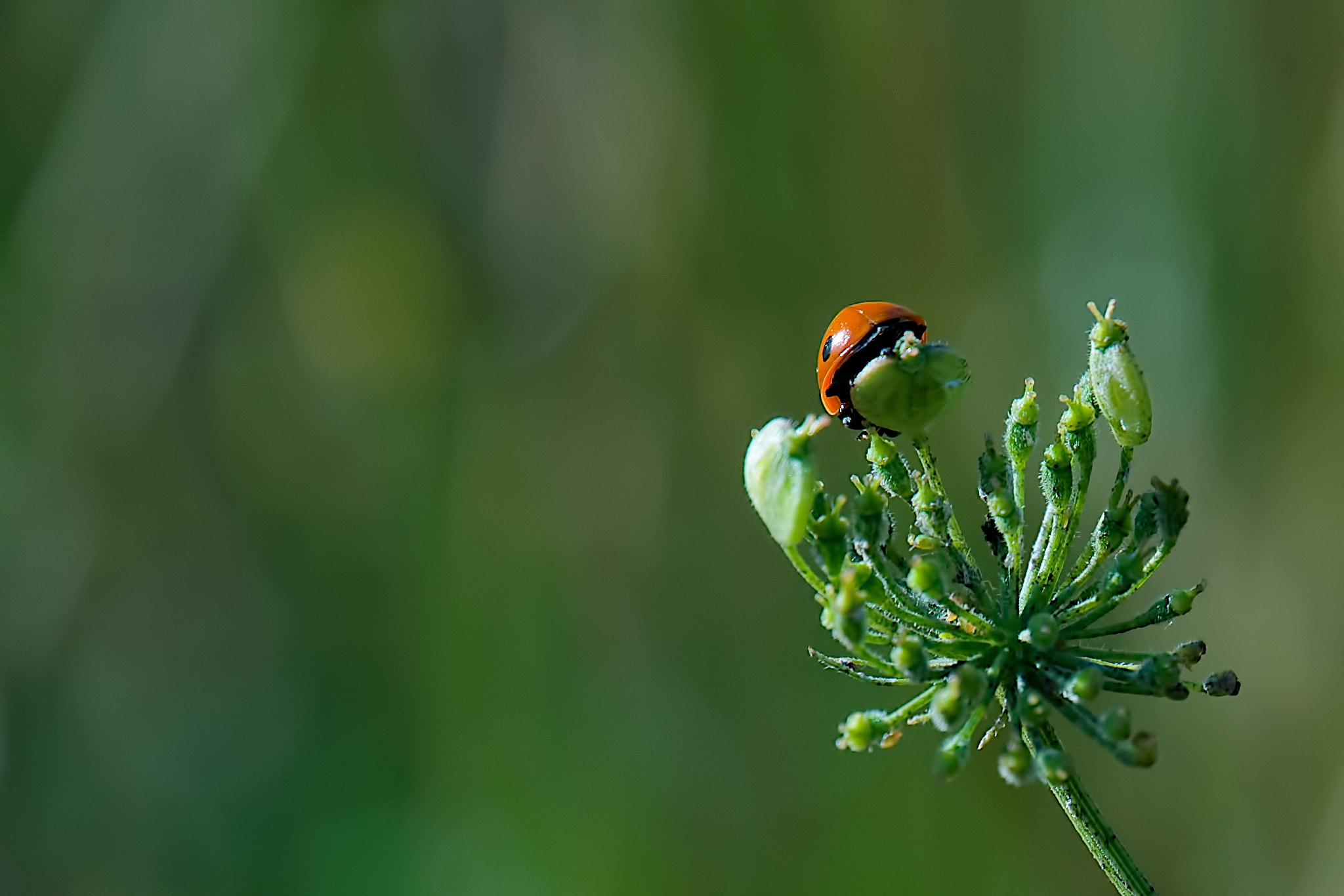 Photograph Almost There by Sunil Chawla on 500px