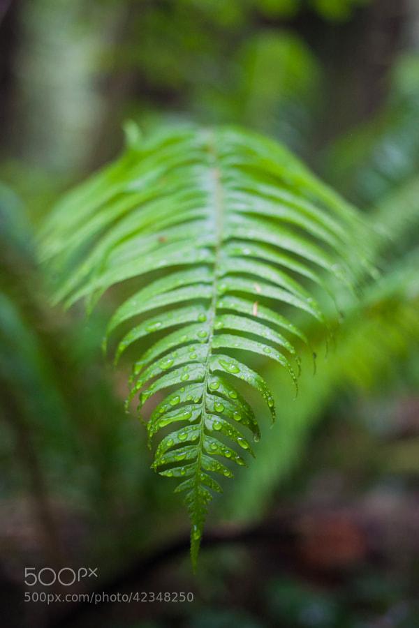 Rainy Forest by Joshua Davis Photography