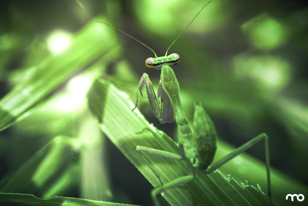Photograph Mantis by Mario Olvera on 500px