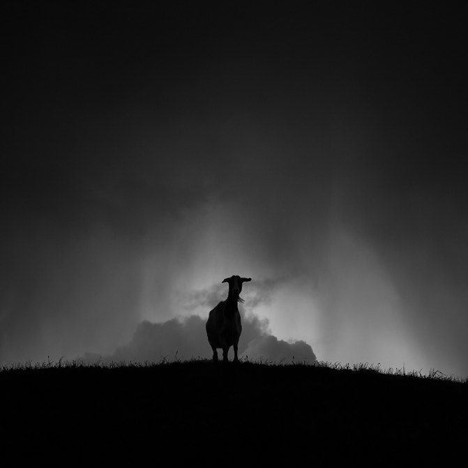 Photograph Observance by Patrick Ems on 500px
