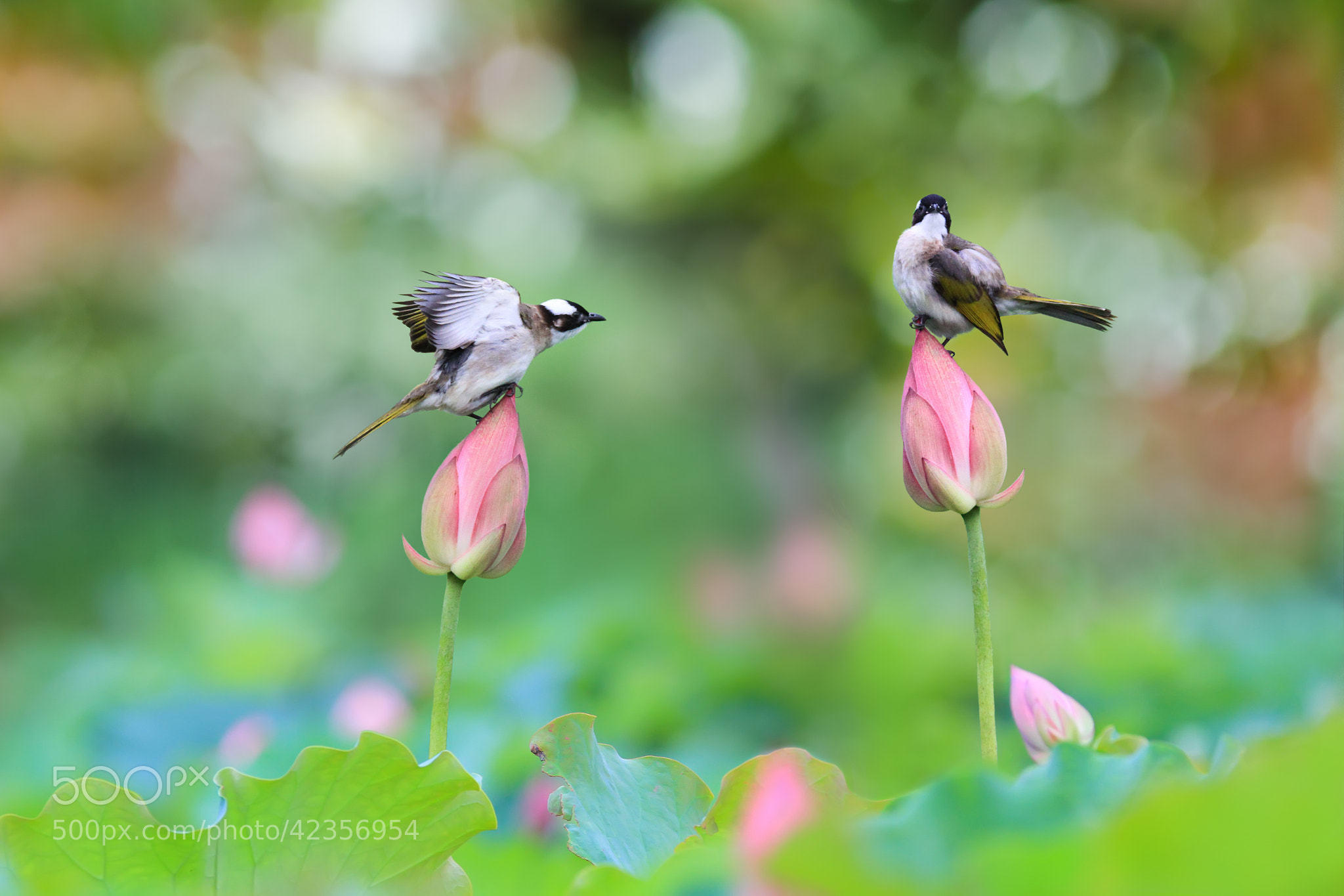 Photograph Love Is In The Air by Sue Hsu on 500px