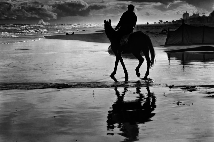 Photograph  Horseplay on the Shore by mario pignotti on 500px