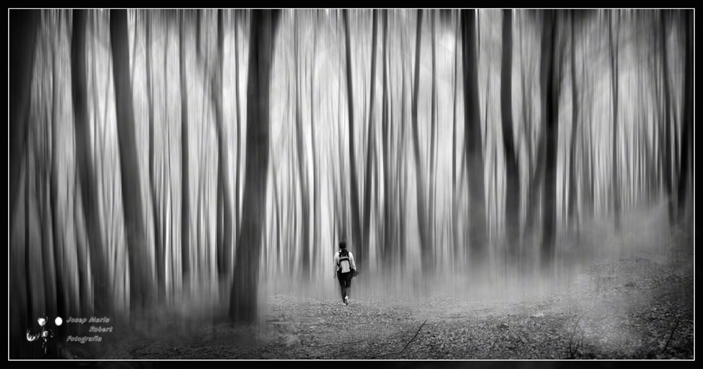 Photograph Walking in Woods by Josep Maria Robert on 500px