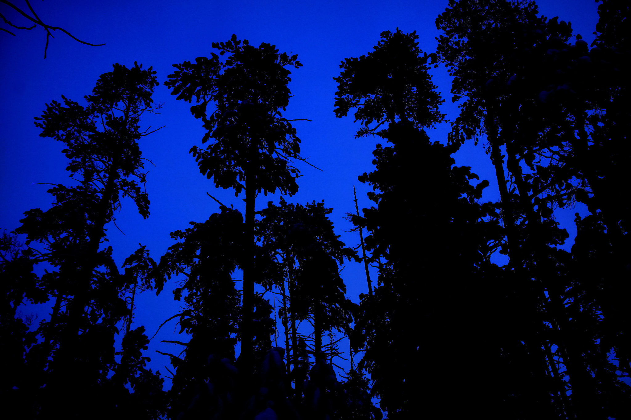 Photograph pines in a darkness by Alexander Schneider on 500px