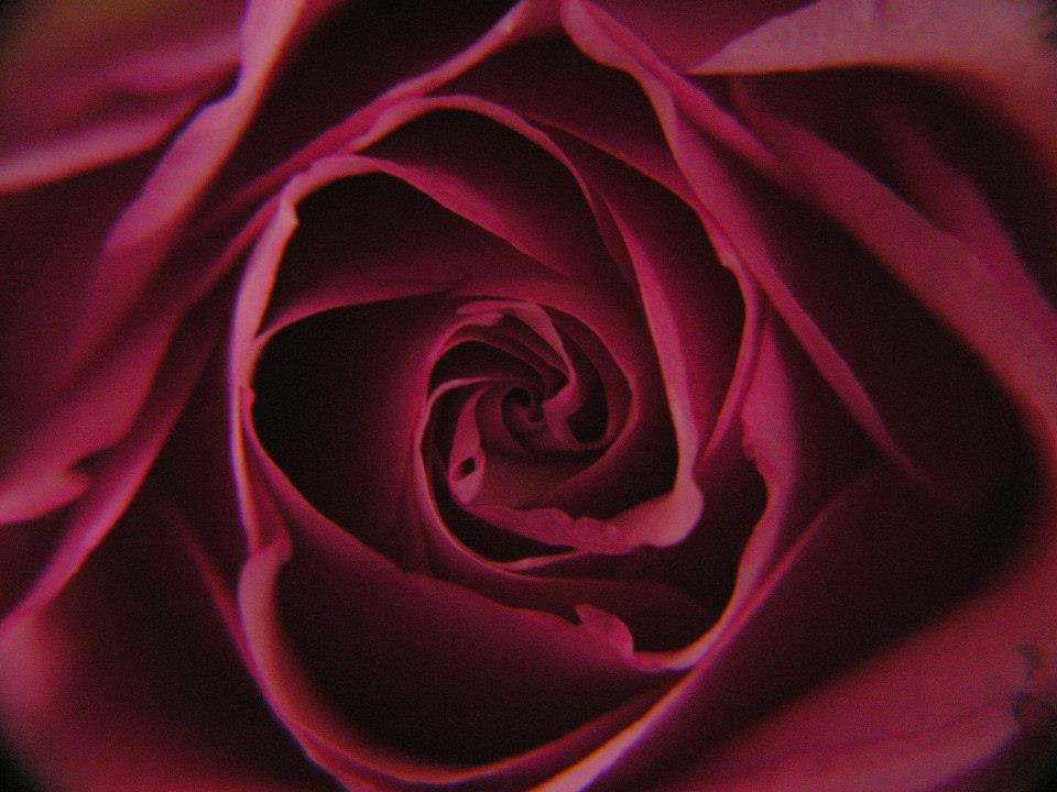 Photograph Red Rose by Soumendra Chowdhury on 500px