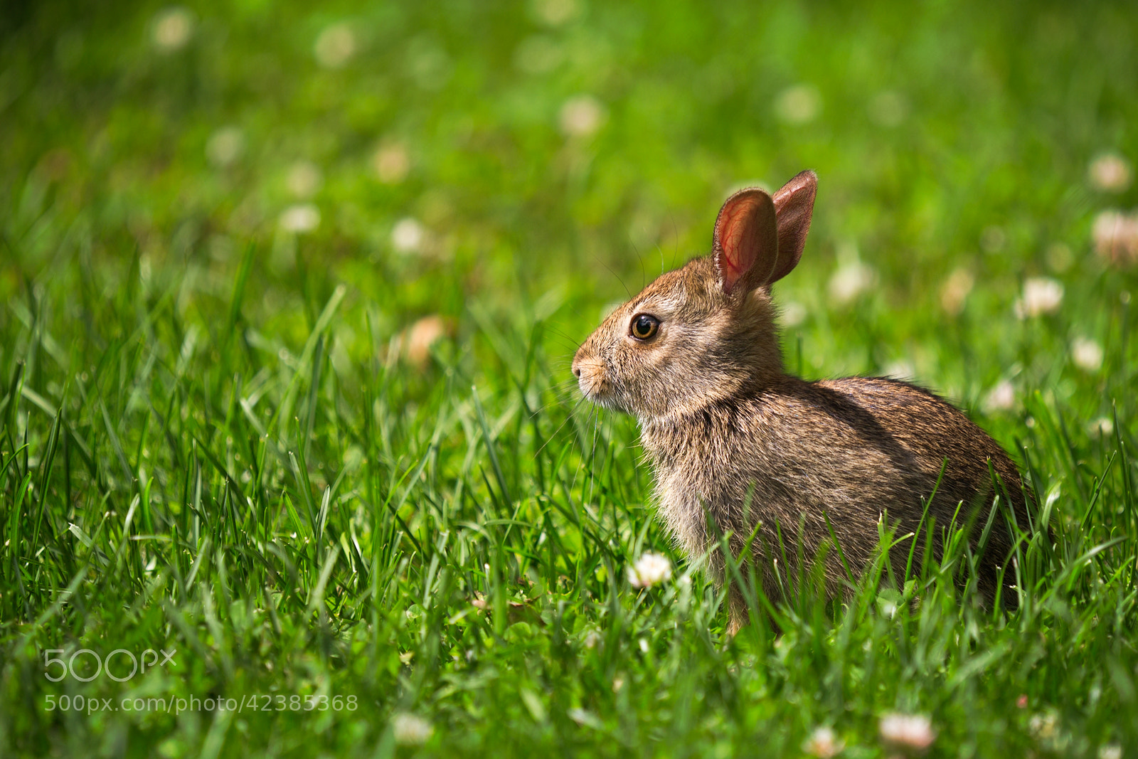 Photograph Baby Rabbit by Tetyana Kovyrina on 500px