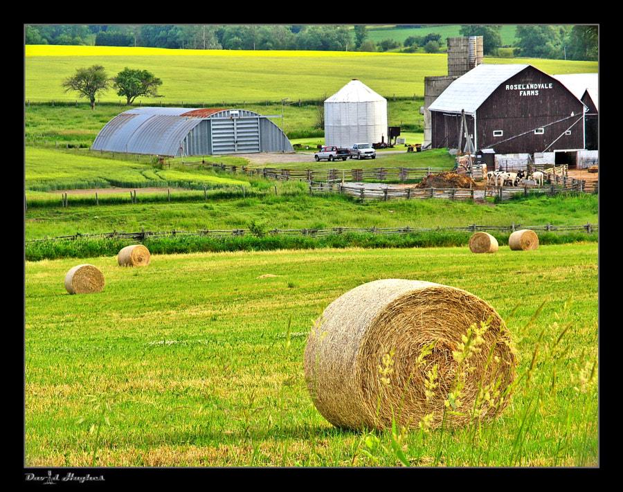 Farm Still Life