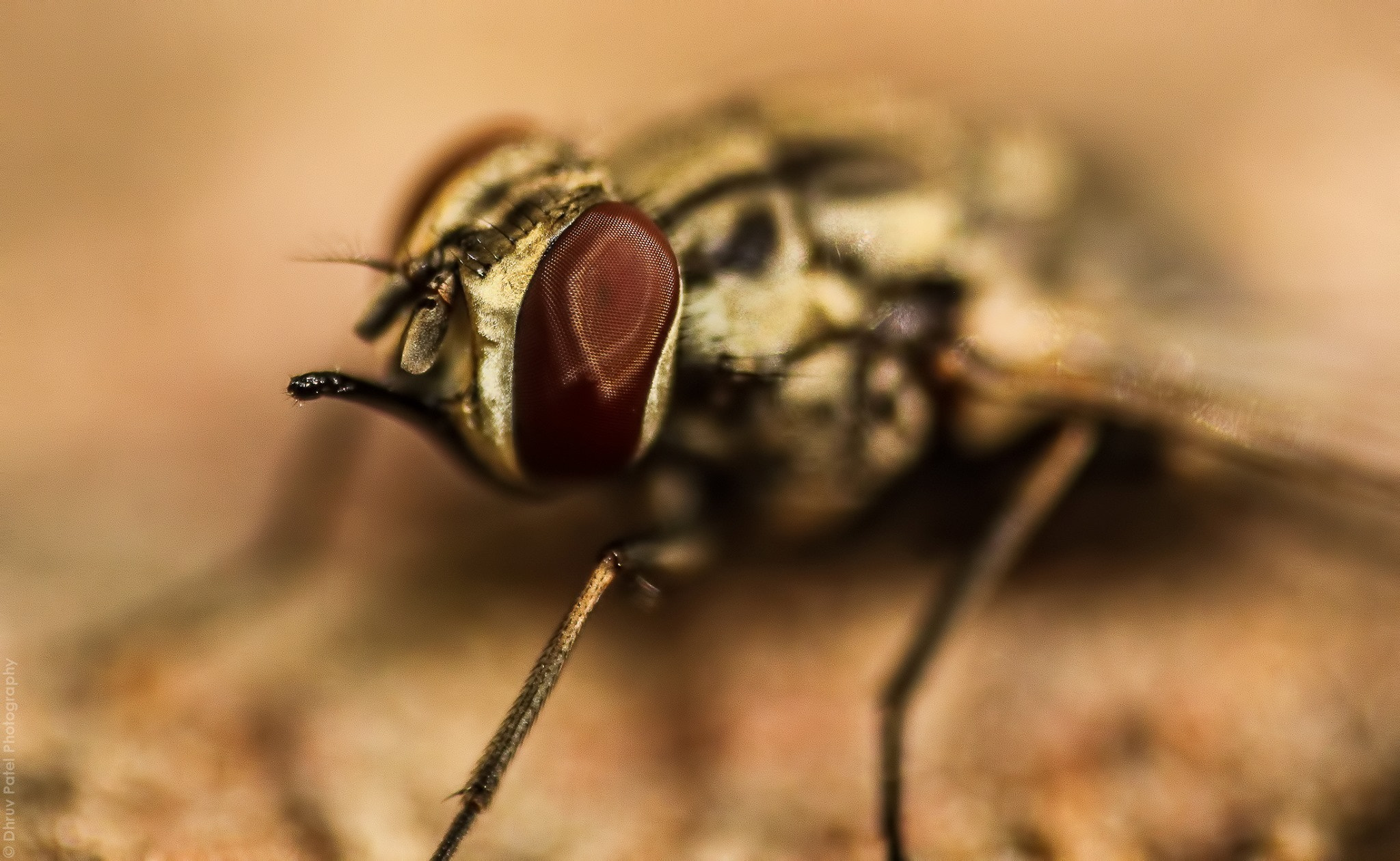 Photograph Fly by Dhruv Patel on 500px