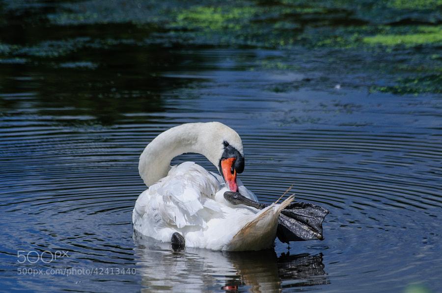 My buddy of the Pond