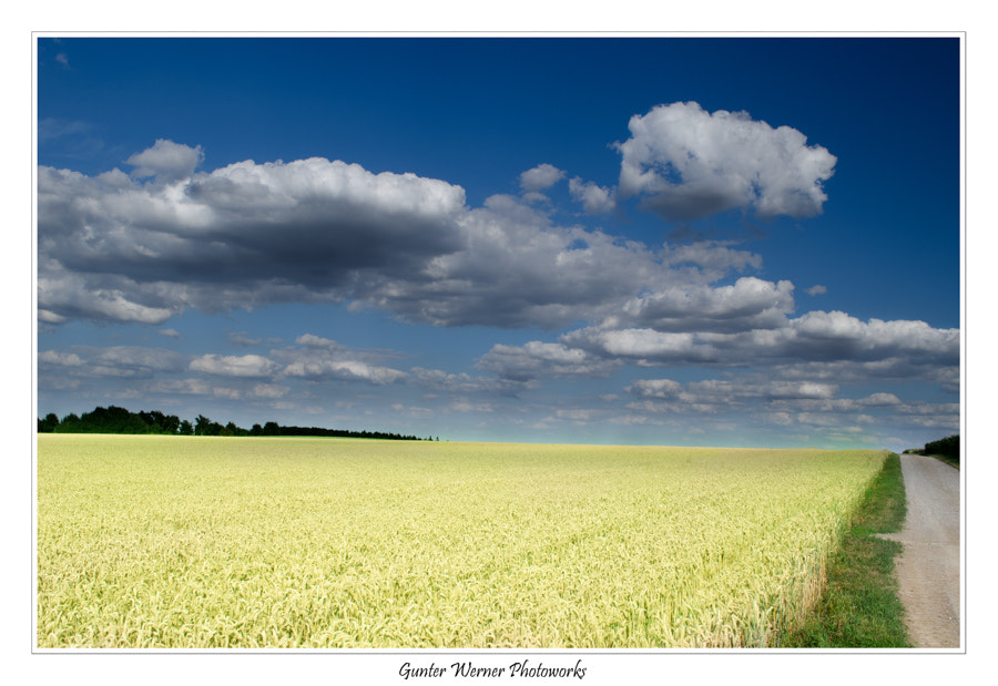 Photograph korn field by Gunter Werner on 500px