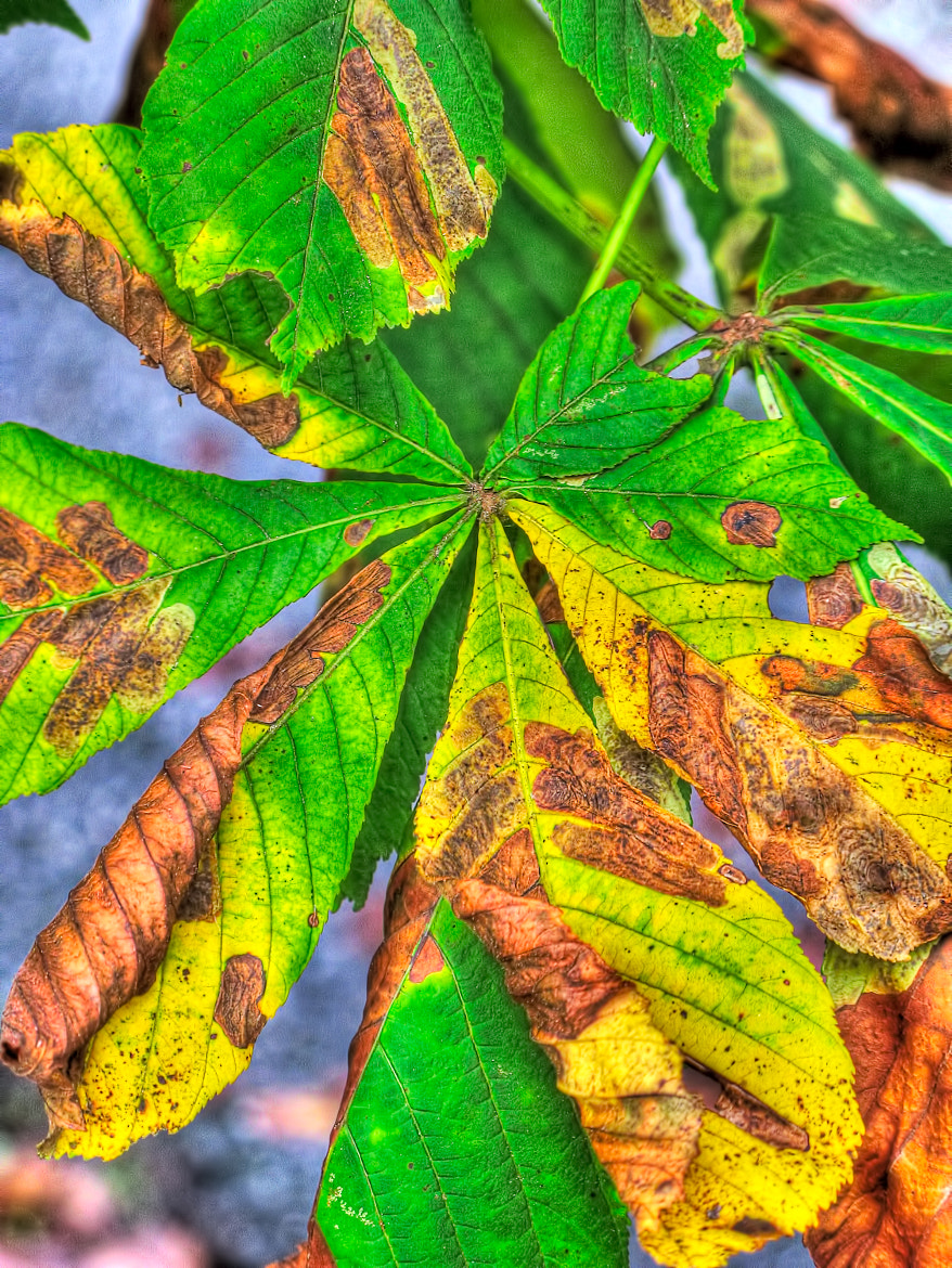 Photograph leaves by Paul Werner Suess on 500px