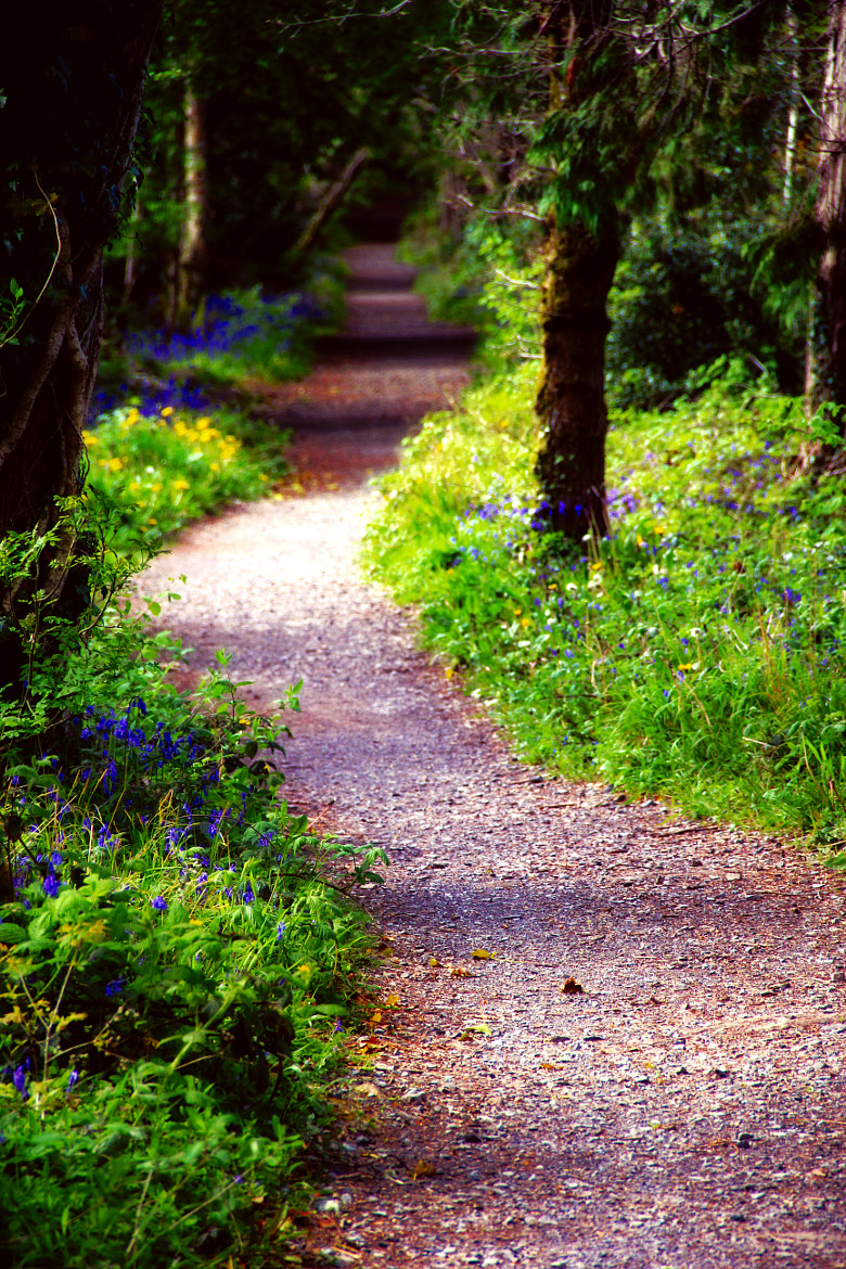 Photograph Bluebell walk by Anne Costello on 500px