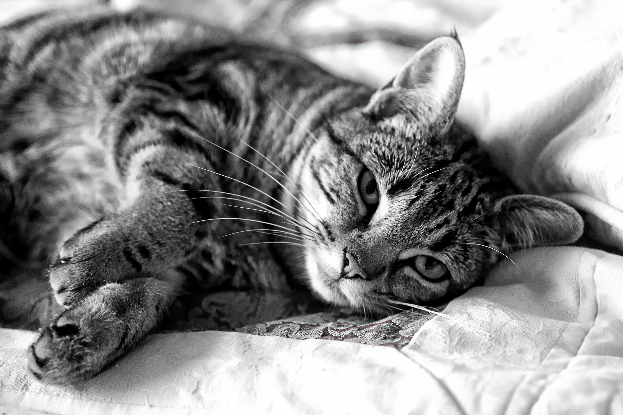 Photograph Sleepy by Anne Costello on 500px
