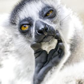 Lemure Kata