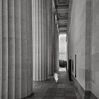 The adventure and awe amongst the columns of Auckland's memorial Museum.
