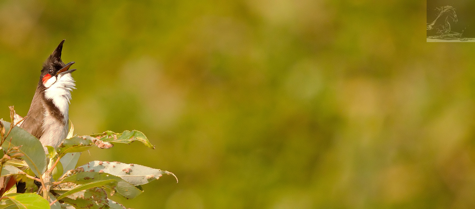 Photograph Red-whiskered Bulbul 01 by Kurien Yohannan on 500px
