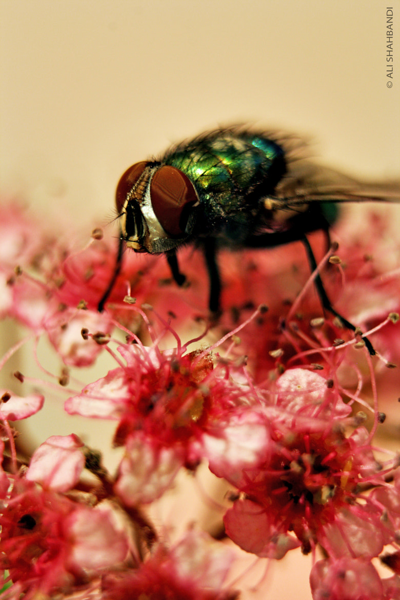 Photograph Fly2 by Ali Shahbandi on 500px