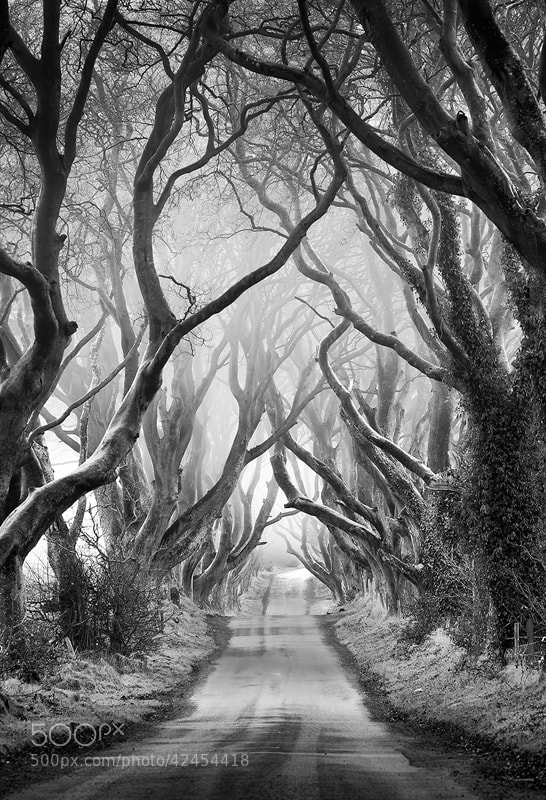 Photograph The Dark Hedges by Pawel Klarecki on 500px