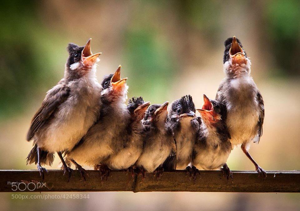 Photograph Choir by Tuan Tran on 500px