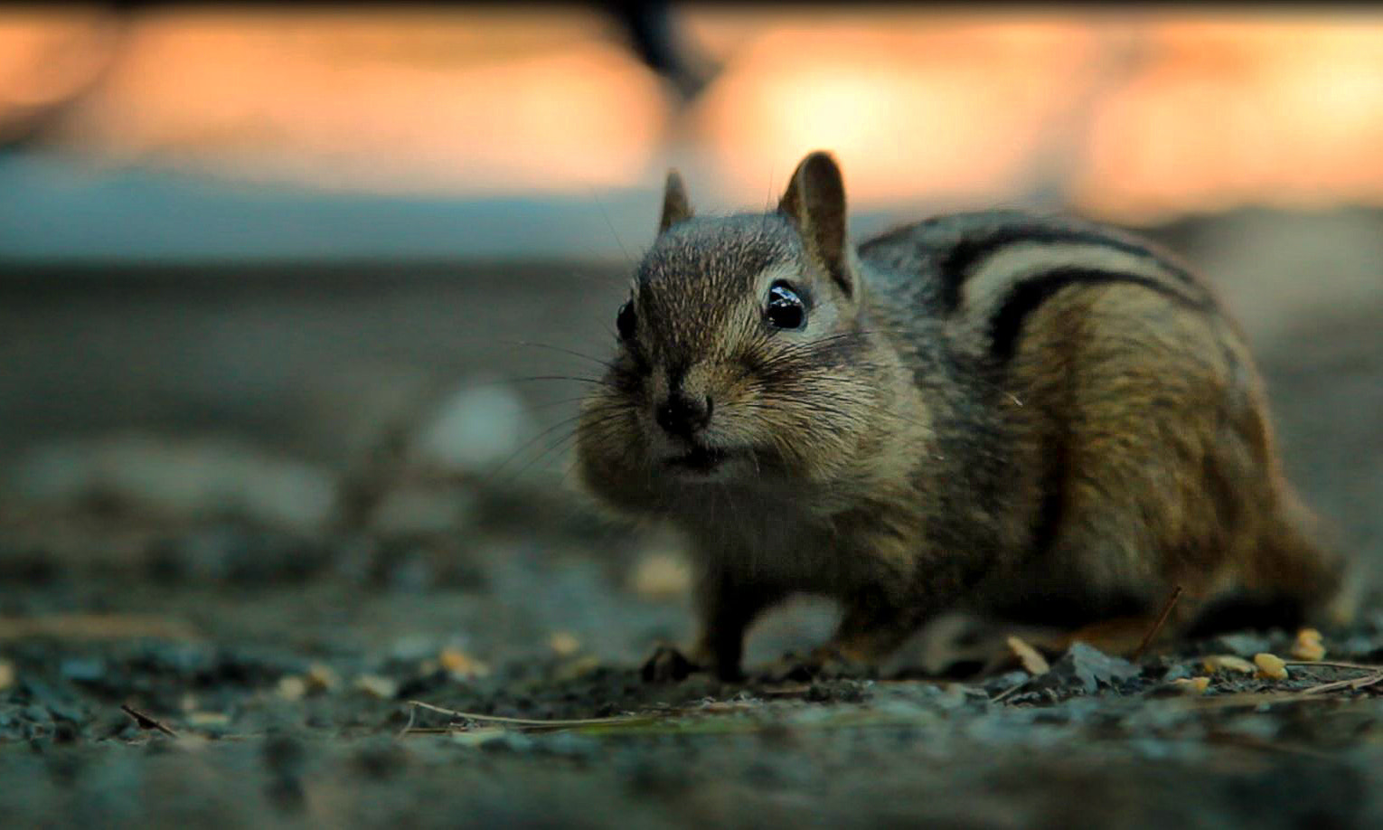 Photograph Mr. Chip Munk by Andy - Toronto  on 500px