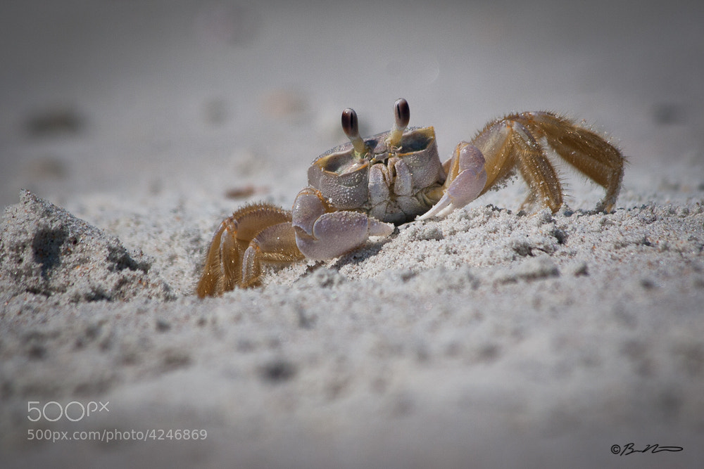 Photograph Beach Bum by Brian Nicklaus on 500px