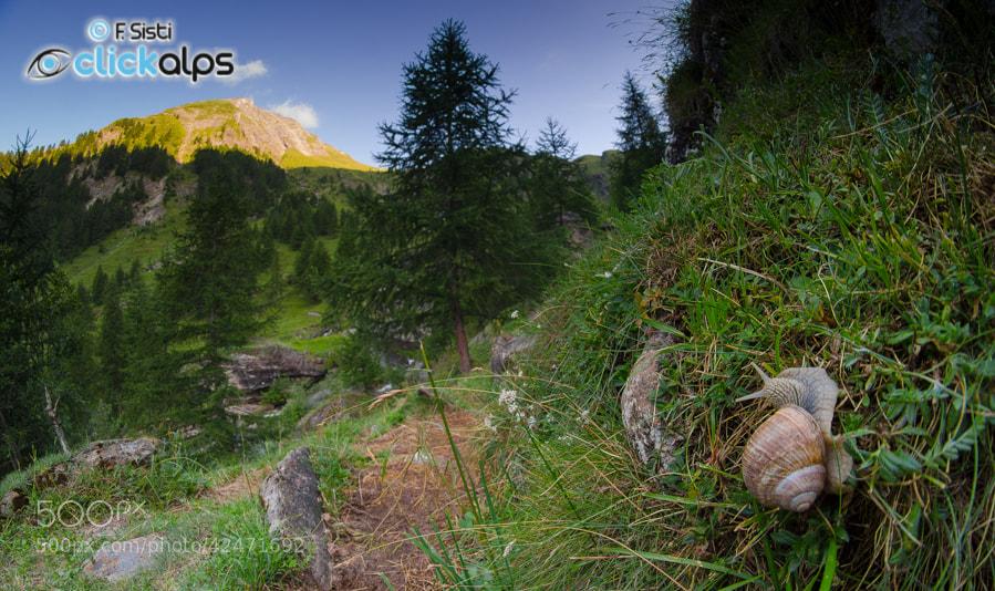 Photograph Elogio della lentezza... (Vallone di Piamprato, Valle Soana, Parco Nazionale Gran Paradiso, Piemonte by Francesco Sisti on 500px