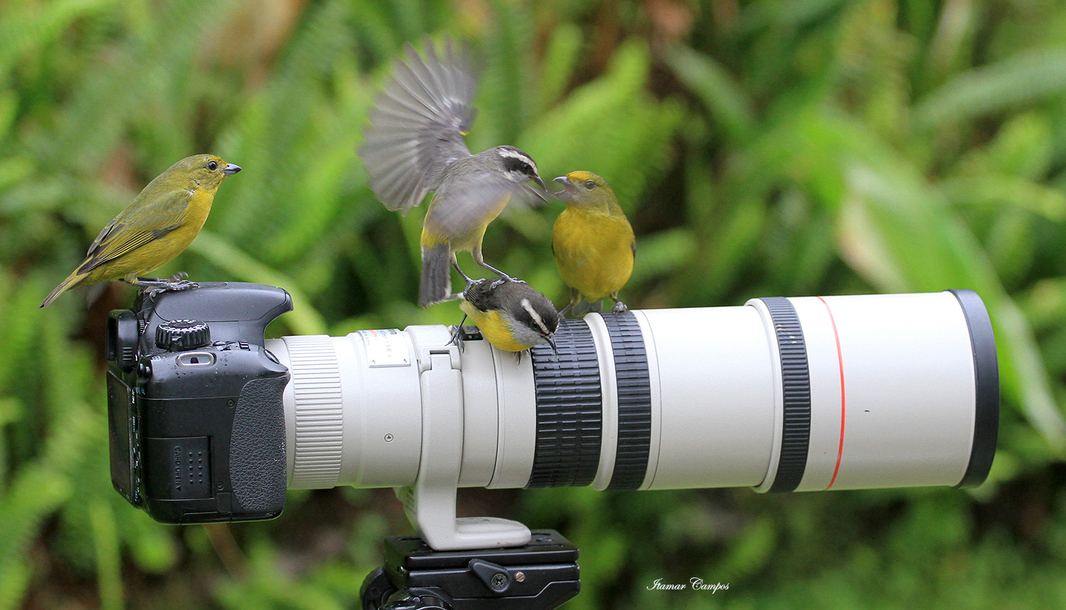Photograph watching the  crash landing ! by Itamar Campos on 500px