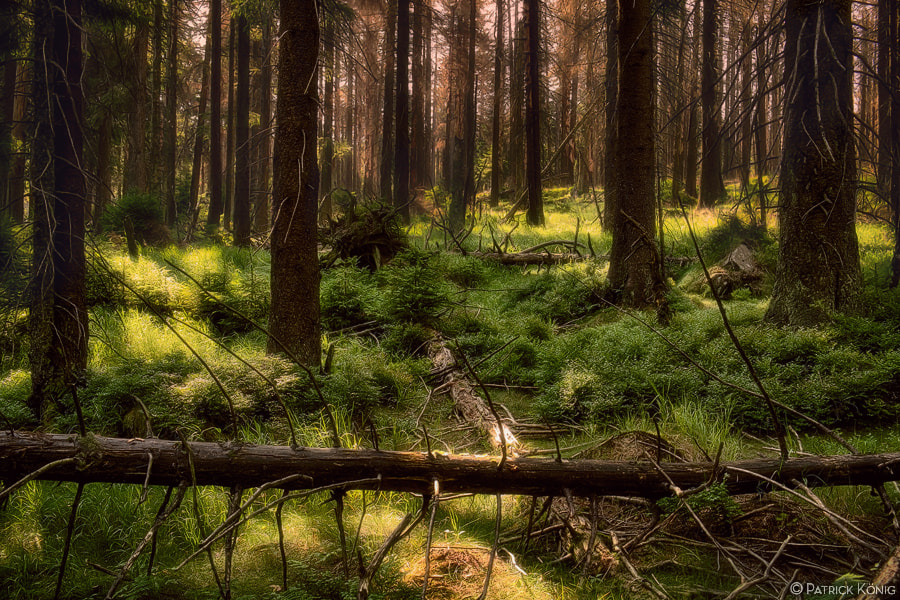 Photograph primeval forest by Patrick König on 500px