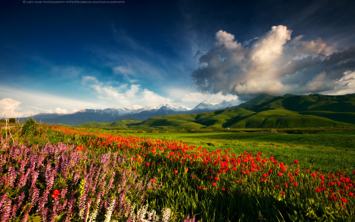 Photograph Tranquility of Spring by Lazy Vlad on 500px