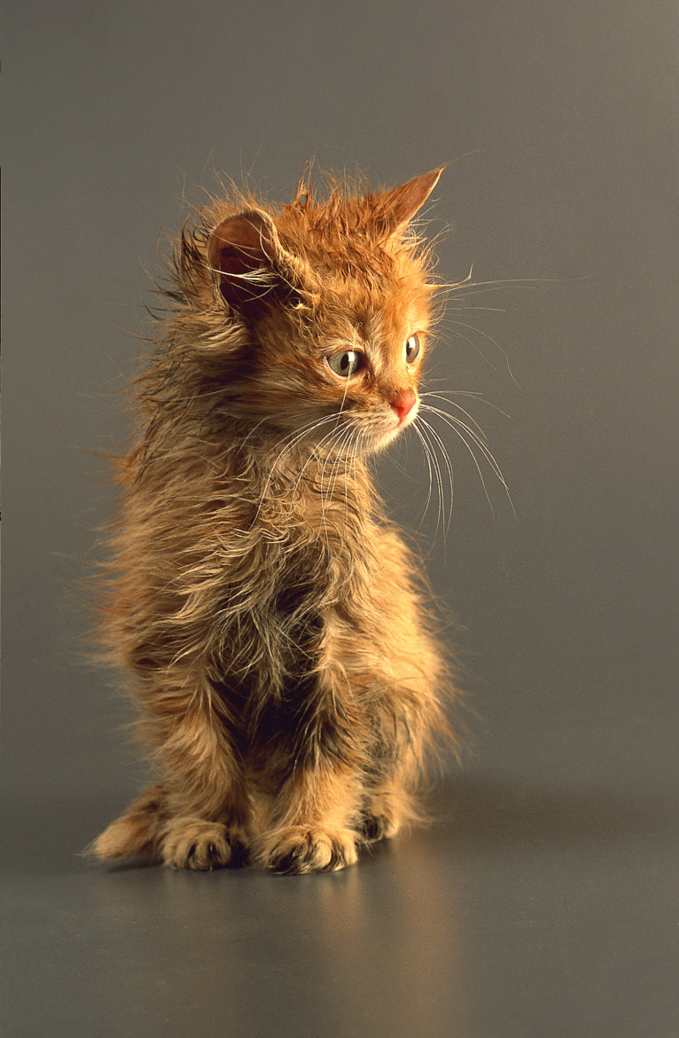 Photograph Posing Kitten by Dewald Reiners on 500px