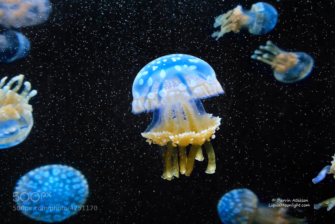 Photograph Cosmic Jellyfish by Darvin Atkeson on 500px