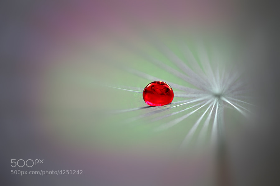 Photograph The drop in red... by Alessandro  Gauci on 500px