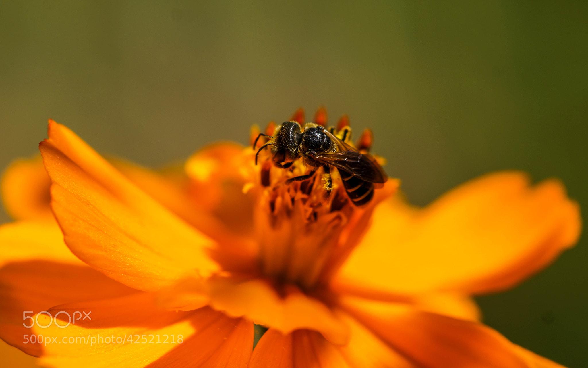 Photograph Orange Petals by Alyssa Paraggio on 500px