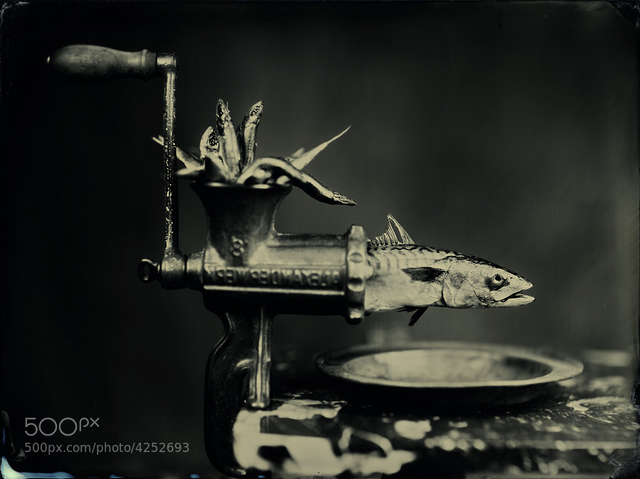 """Photograph """"Darwinian mill"""" by Alex  Timmermans on 500px"""