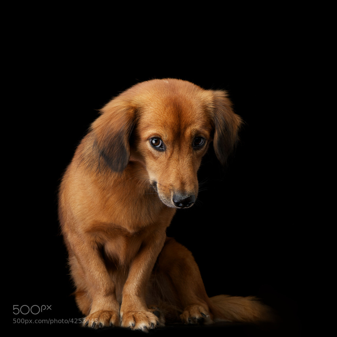 Photograph Leica: Reluctant by Lecollie Portraits on 500px