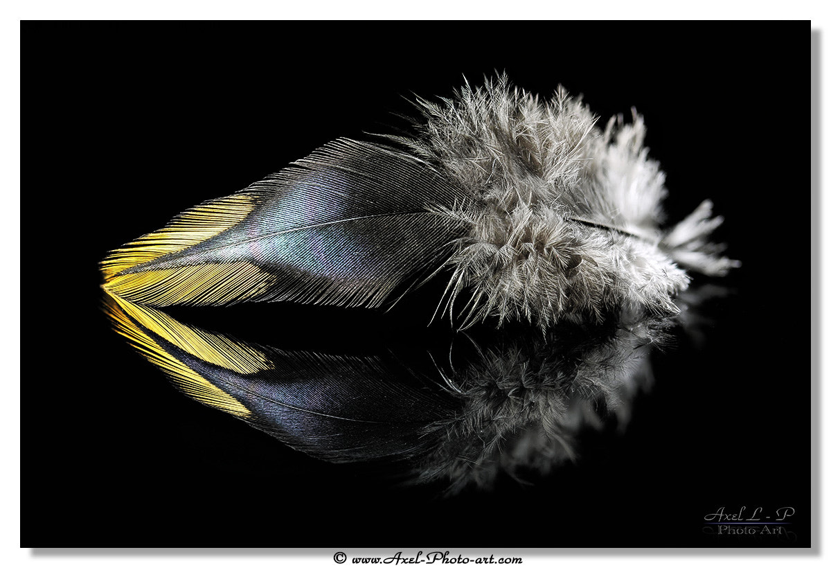Photograph Plume by Axel Photo-art on 500px