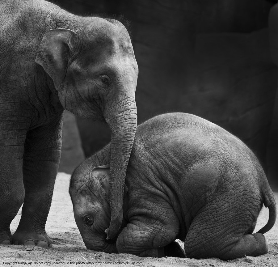 Photograph Don't cry baby brother by K J on 500px