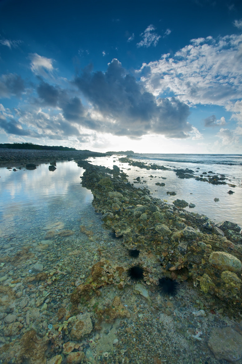 Photograph Urchin Coast by Mike Fuhr on 500px