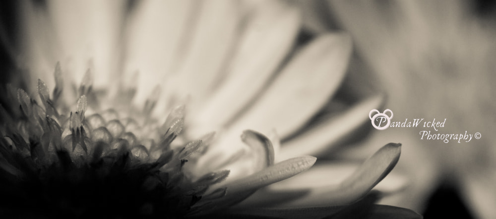Photograph Shadow and flower by PandaWicked  on 500px