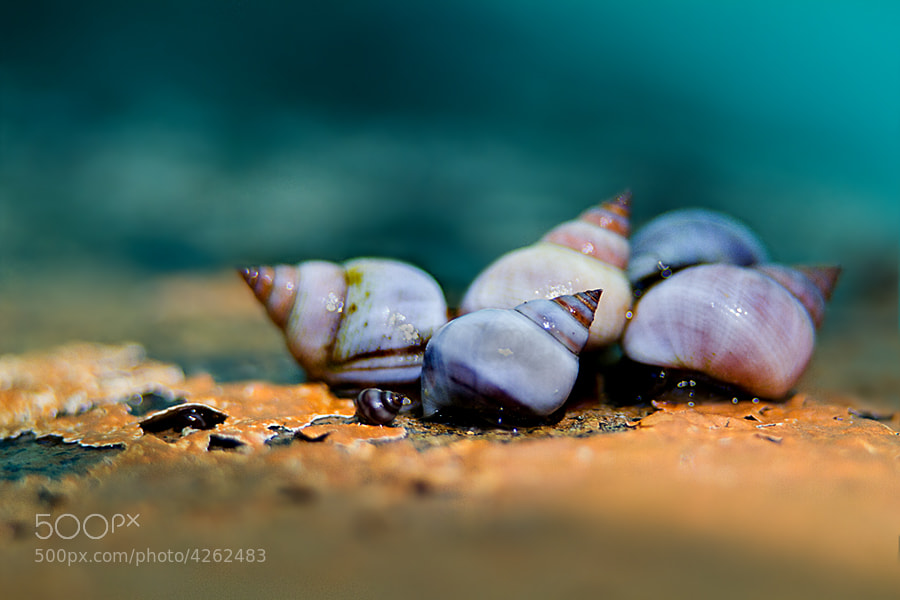 Herd of Shells