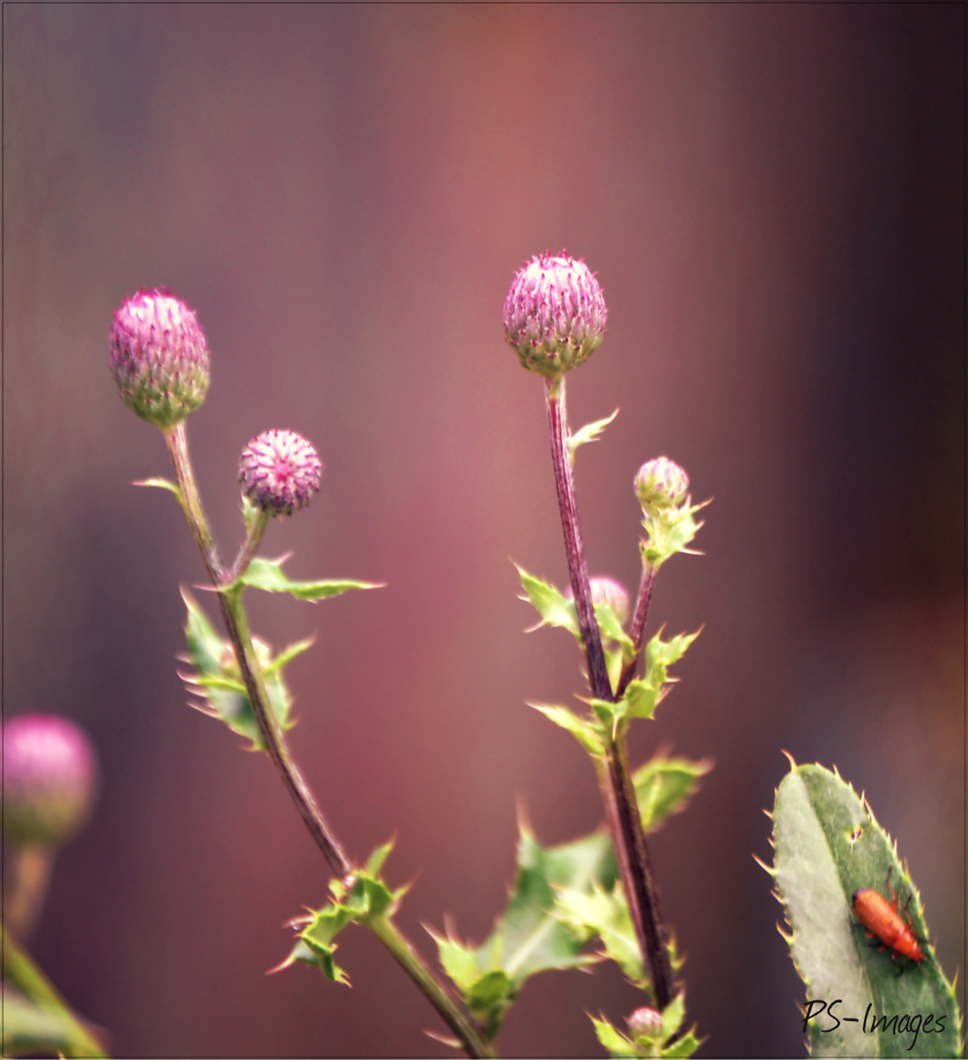 Photograph Flowers by prince sharma on 500px