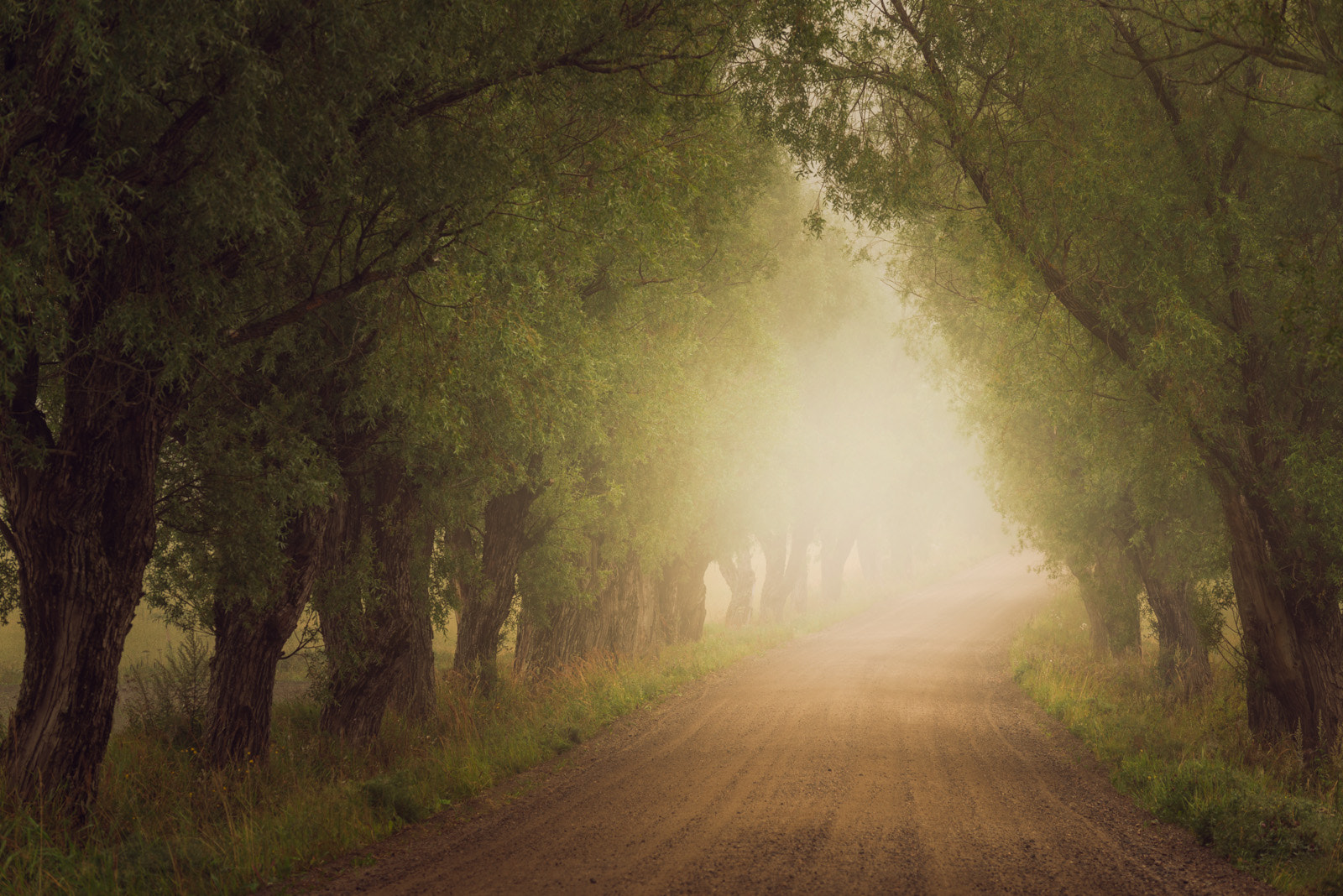 Photograph Path by Mikko Lagerstedt on 500px