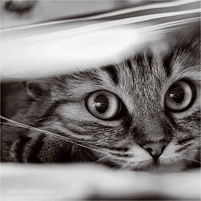 Photograph [Fluffy Watcher] by Tragedienne [Rustle] on 500px
